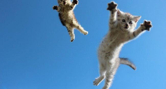 """Os """"pulos do gato"""" do marketing para profissionais liberais"""